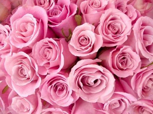 Une fleur, une vertu