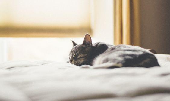 beauty-sleep-haut-article-chat