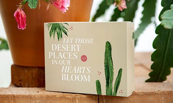 Nyfiken på produkterna i juniboxen Desert Dreams?