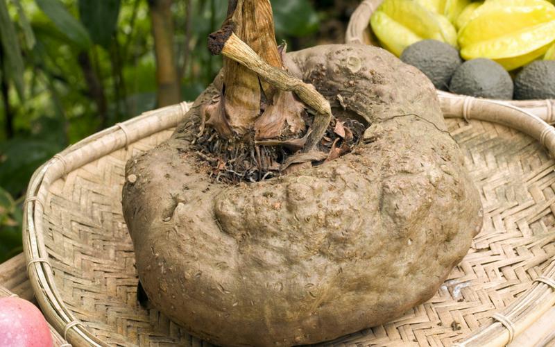 konjac root - glucomannan