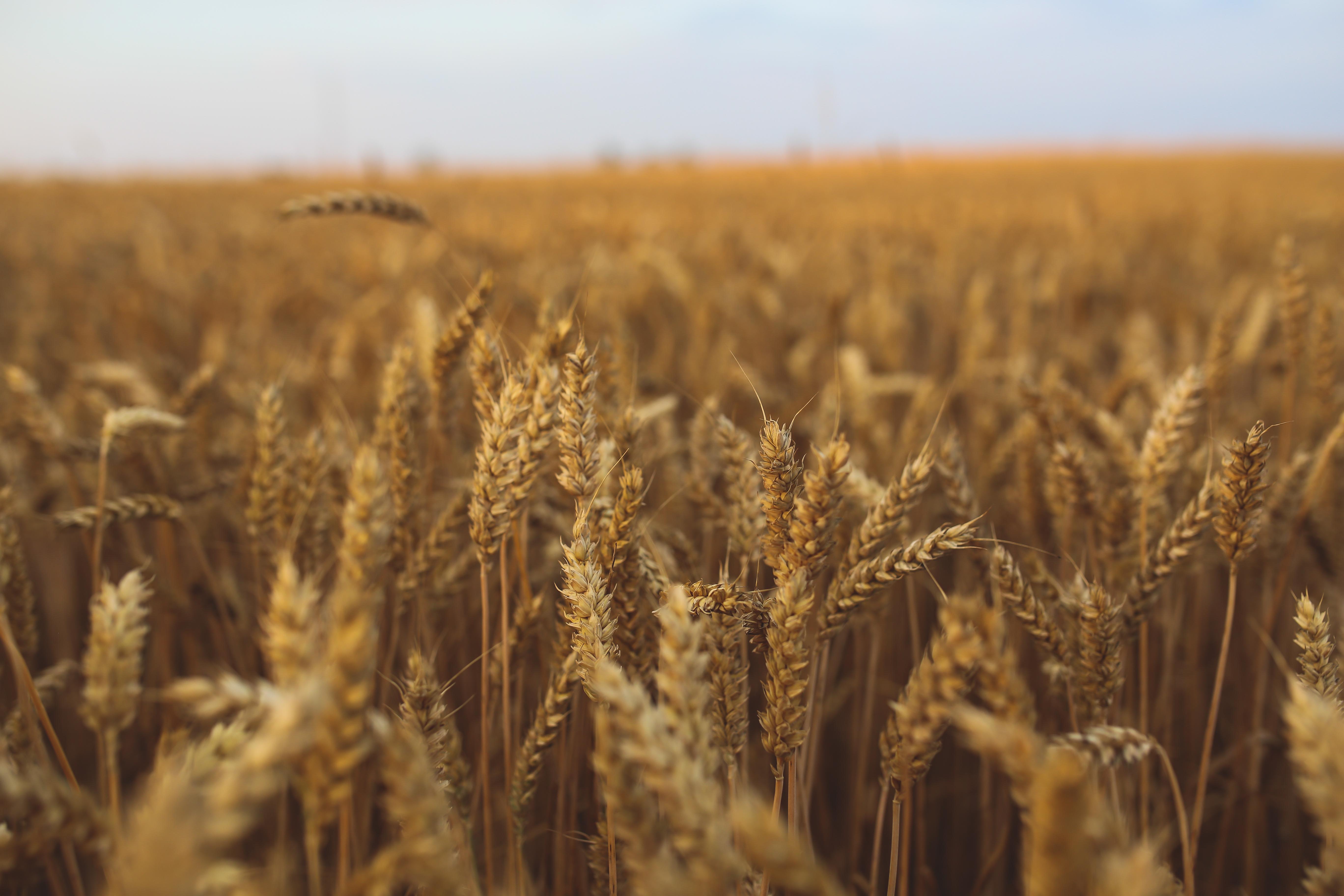 Healthy whole grains