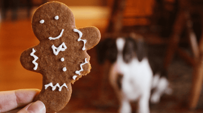 5 Festive Gingerbread Recipes to Make This Season