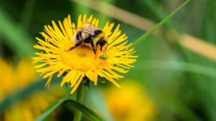 Pyłek pszczeli | Korzyści, opinie, zastosowanie | Miód | Naturalne słodziki