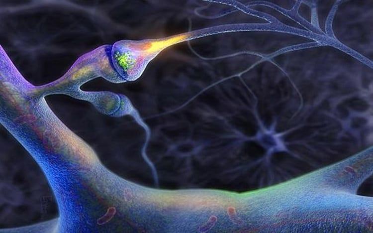 Úloha Neurotransimeterov | Regenerácia Svalov