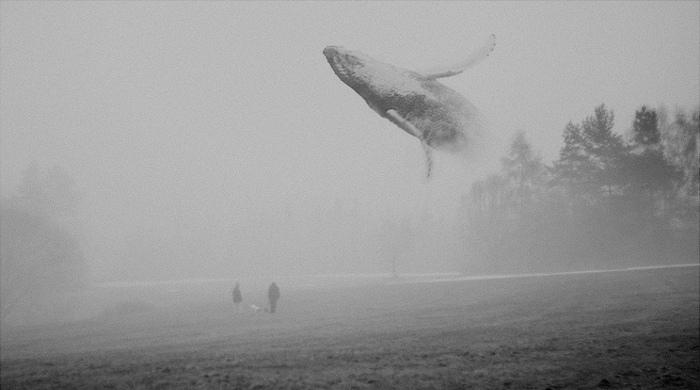 Martin Vlach Photography