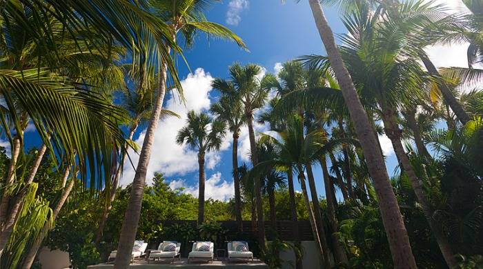 La Banane: A blue sky filled with tall palm trees above some sun loungers.