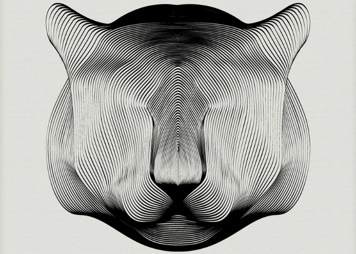 A monochrome illustration of a tiger's face by Andrea Minini.