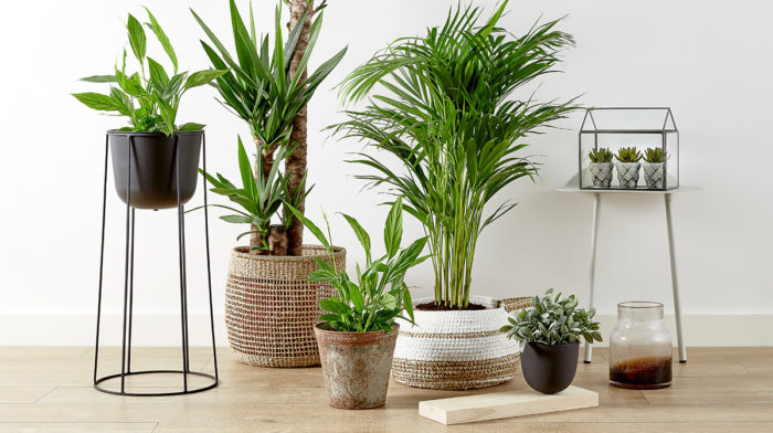 Can house plants make us healthier?
